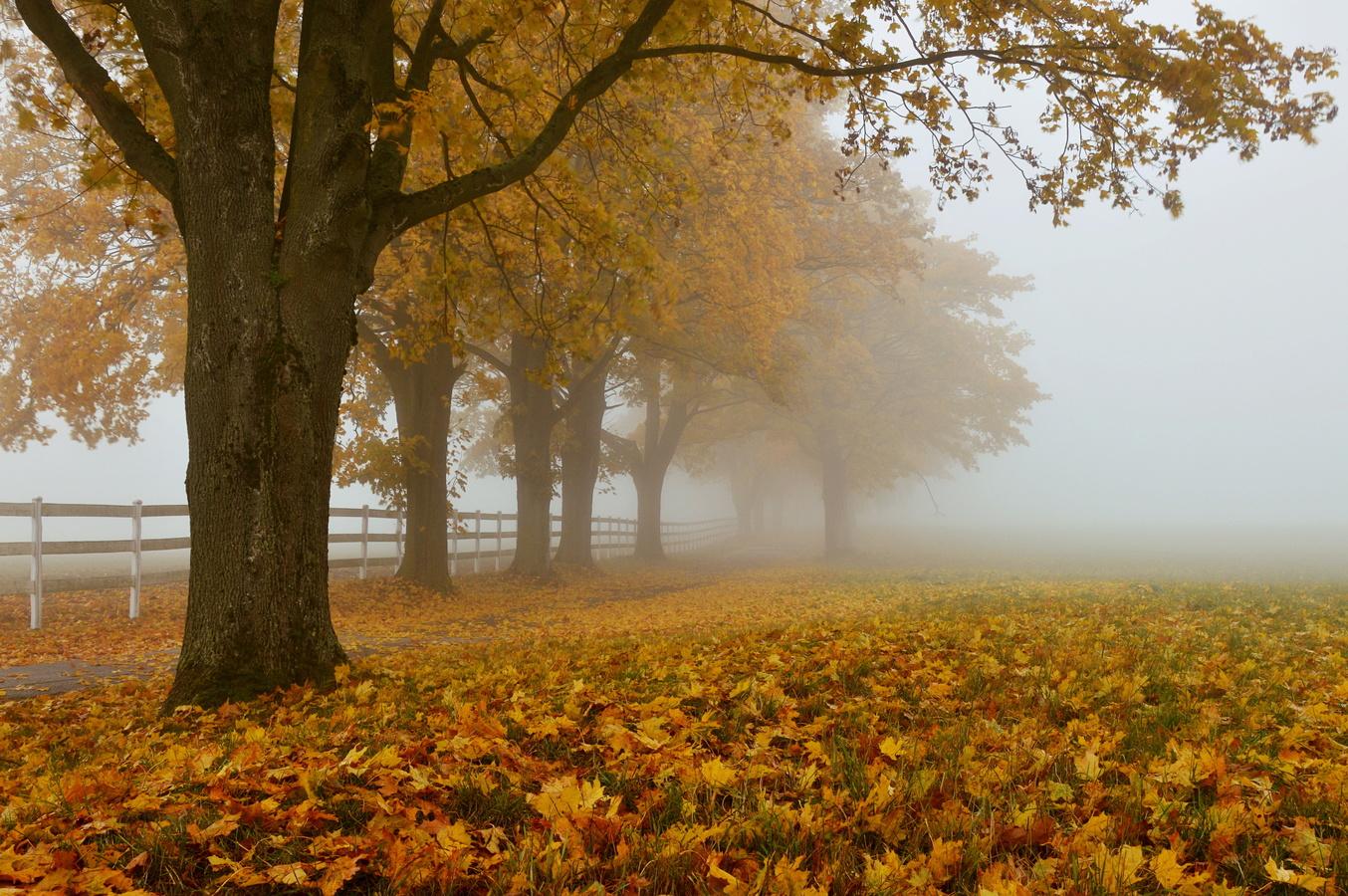 Podzimní atmo...