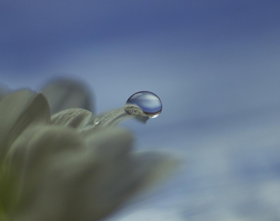 Modrá slza