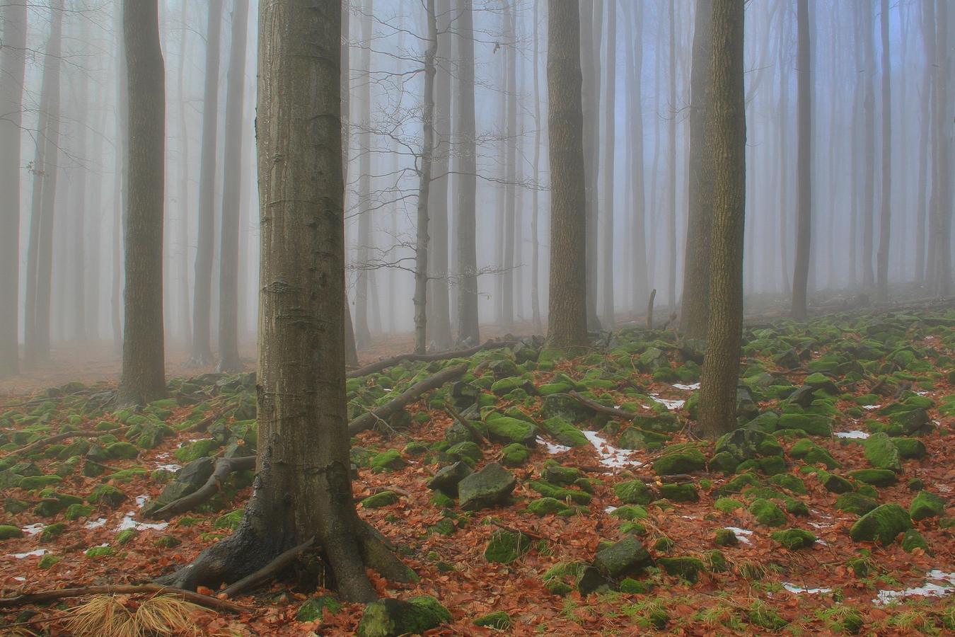 Mlha na Studenci v Lužických horách