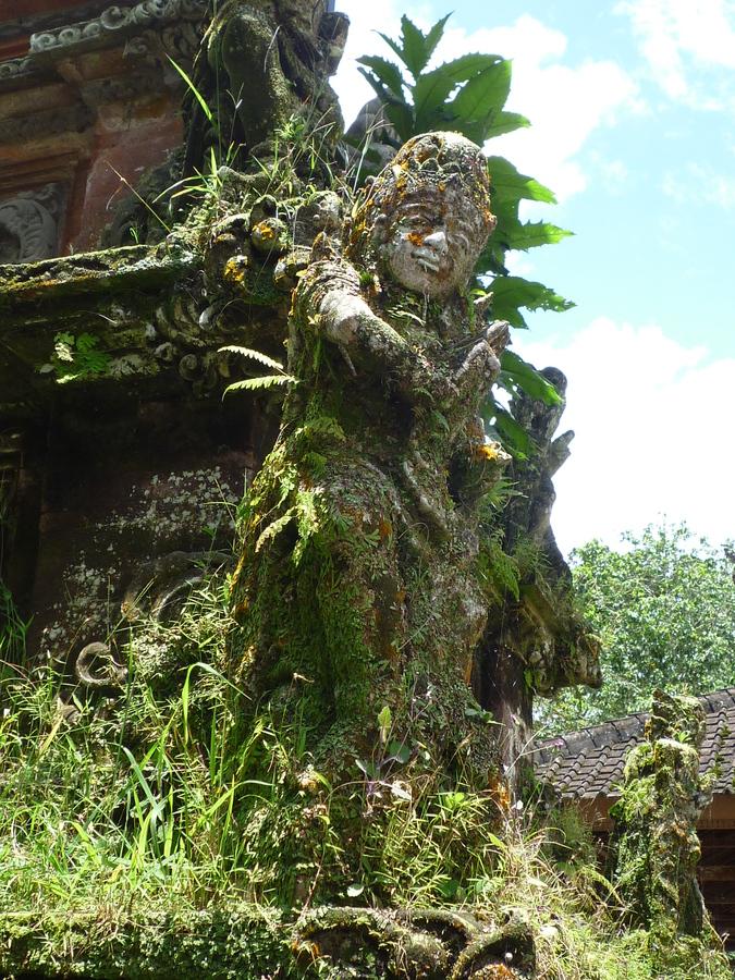 Kouzlení tropické vegetace
