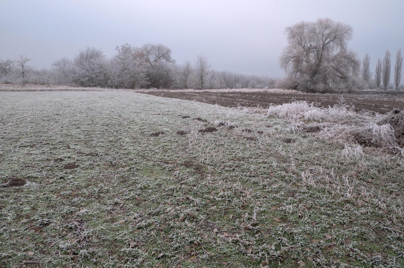 Zmrzlé pole