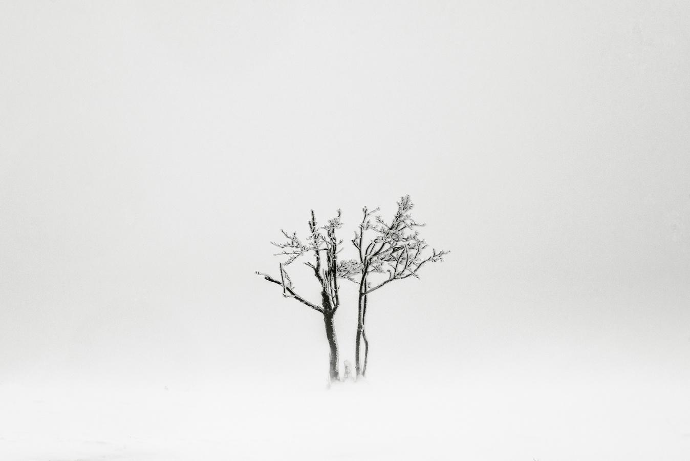 Bílá tma