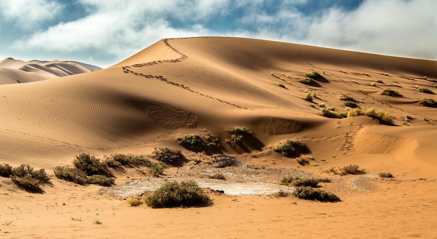 Stopy na duně