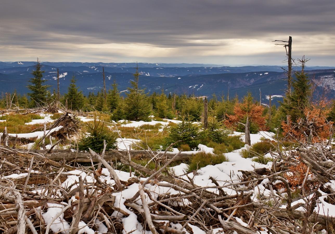 Mrtvý les na Smrku