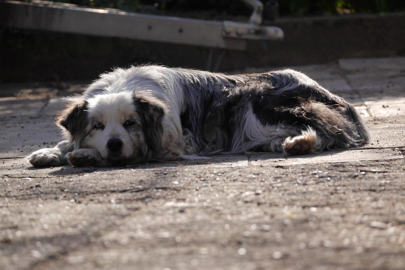 Ashley odpočívá na sluníčku
