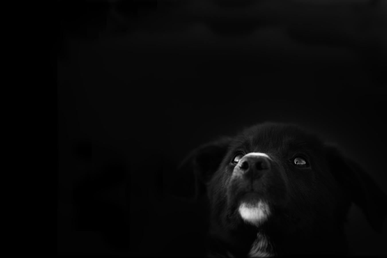 černobílo