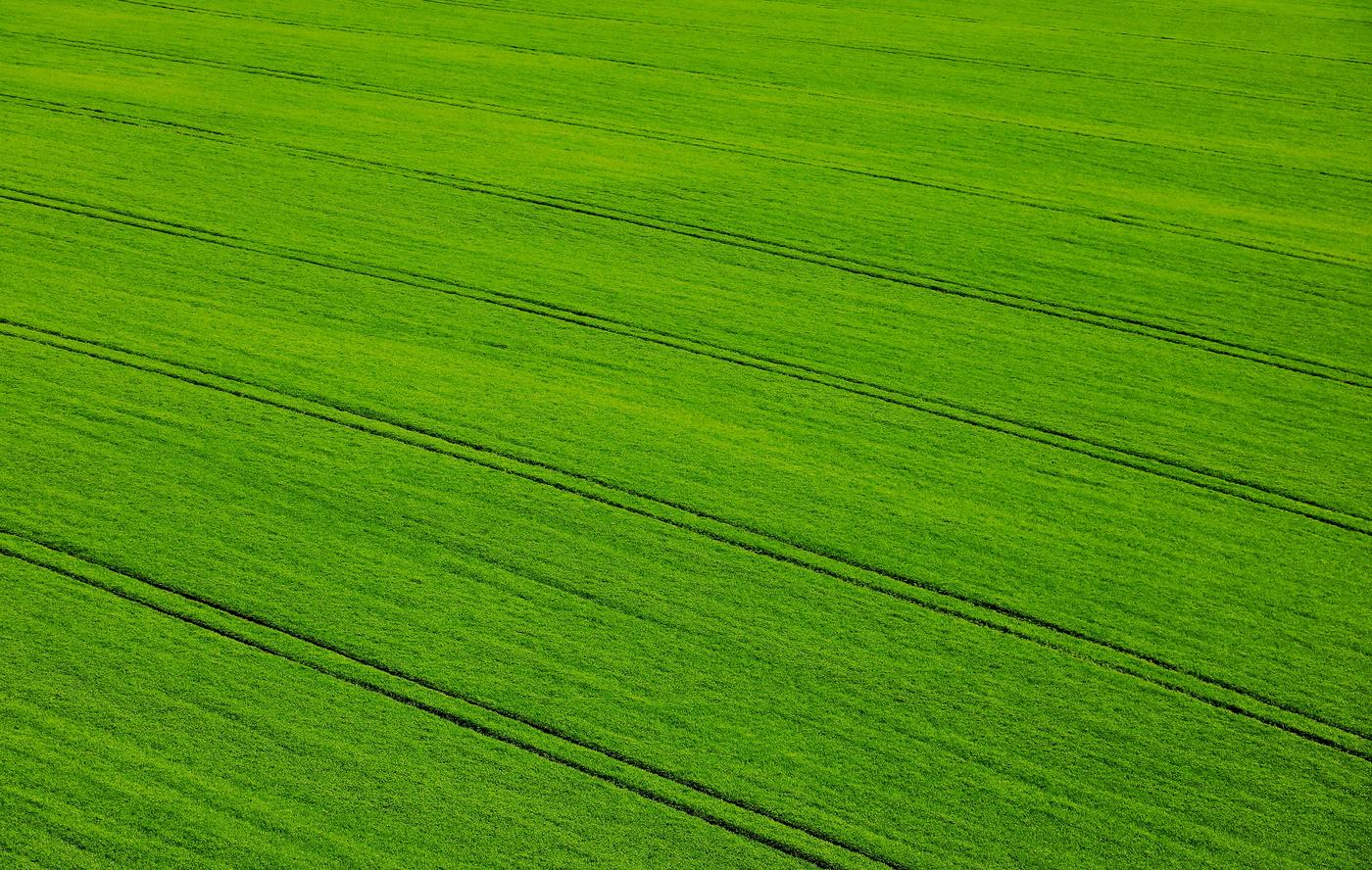 zelená uklidňuje
