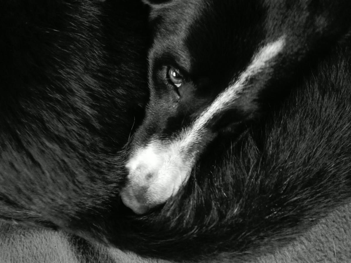 Psi mluví ocasem
