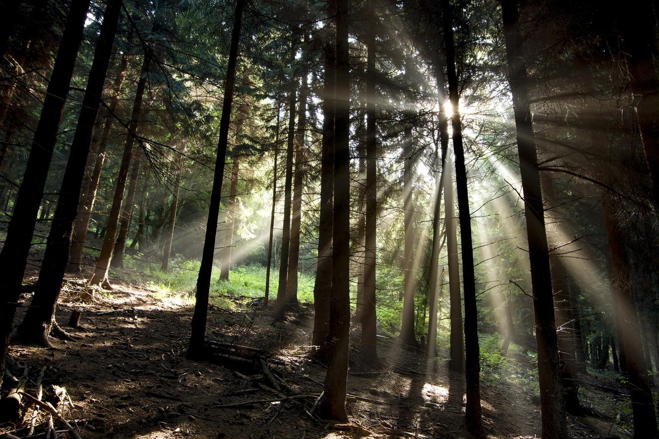 Paprsky v lese