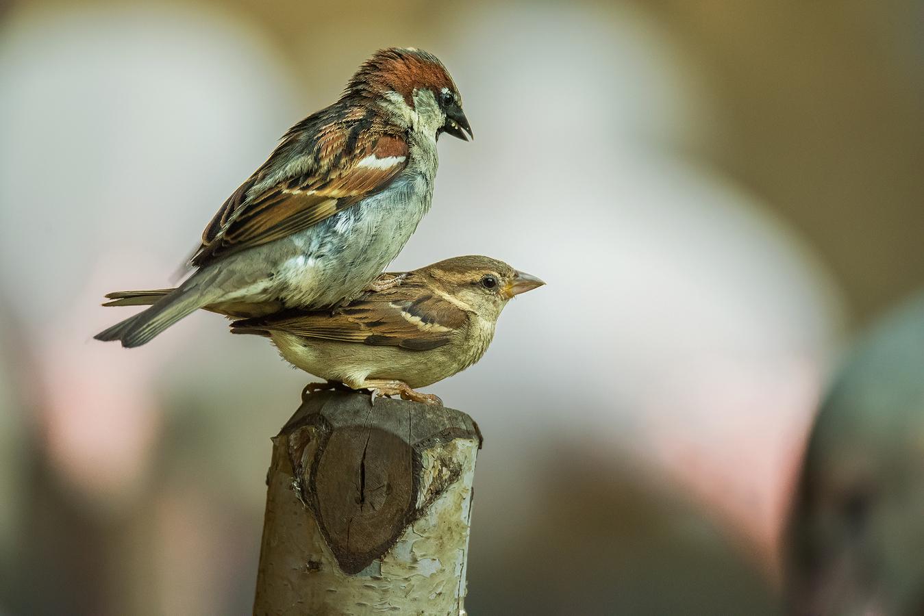 Vrabčáčí rozverné léto