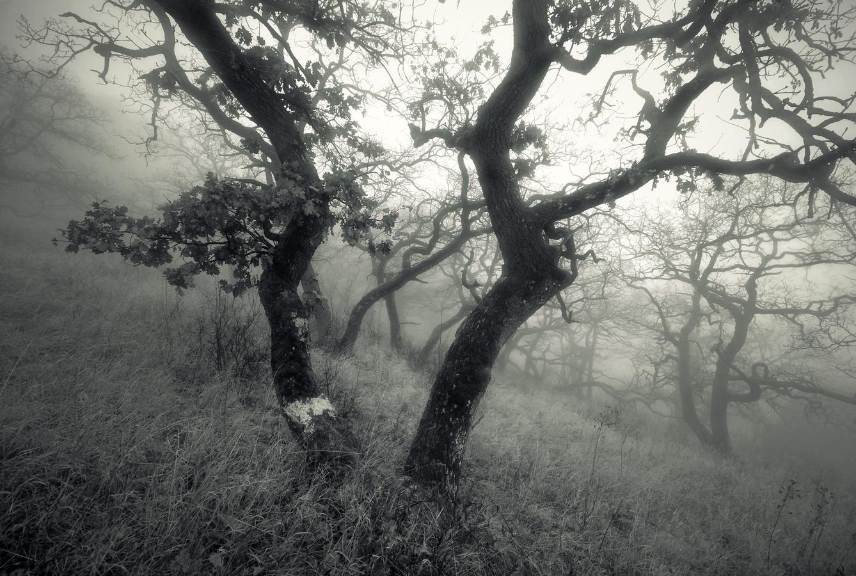 Pálavské stromy 8