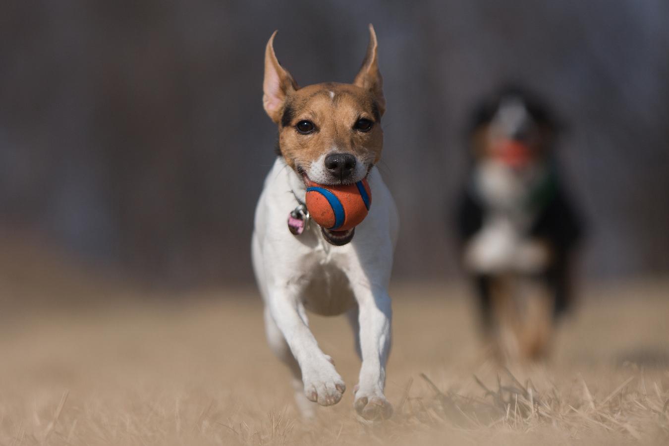 Psi s míčky