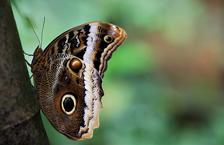 Motýli oka