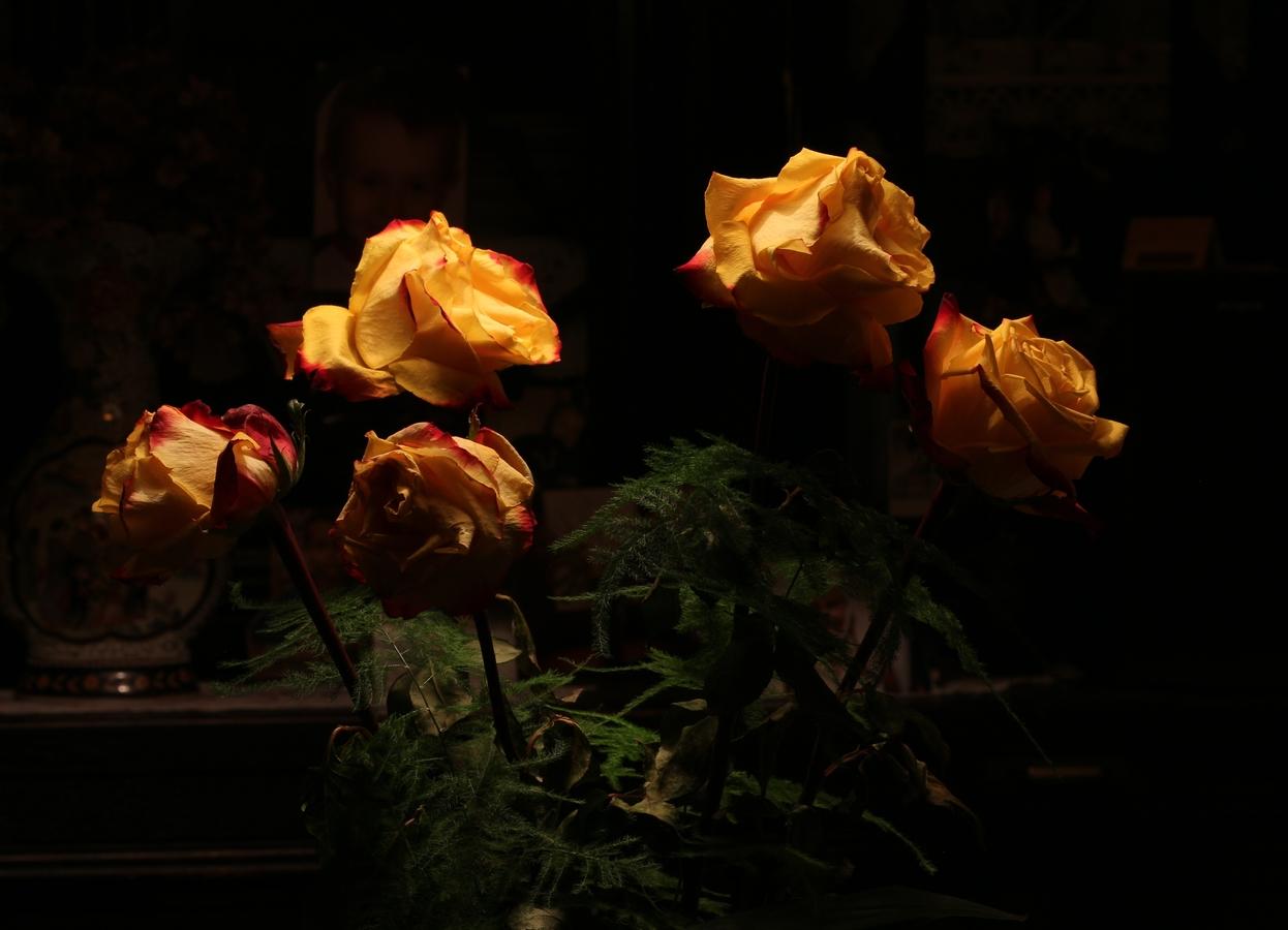 Růže za zenitem své krásy