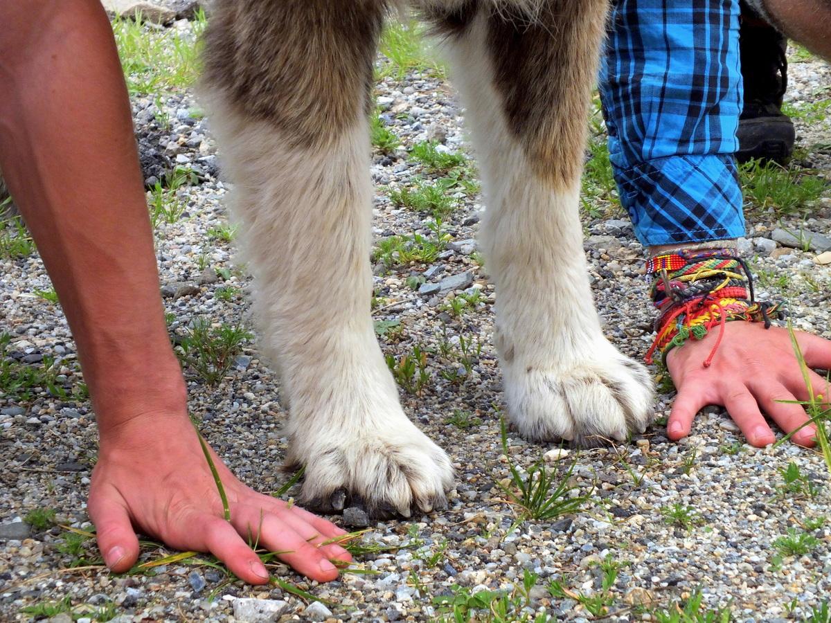 88 kilo čisté psí váhy