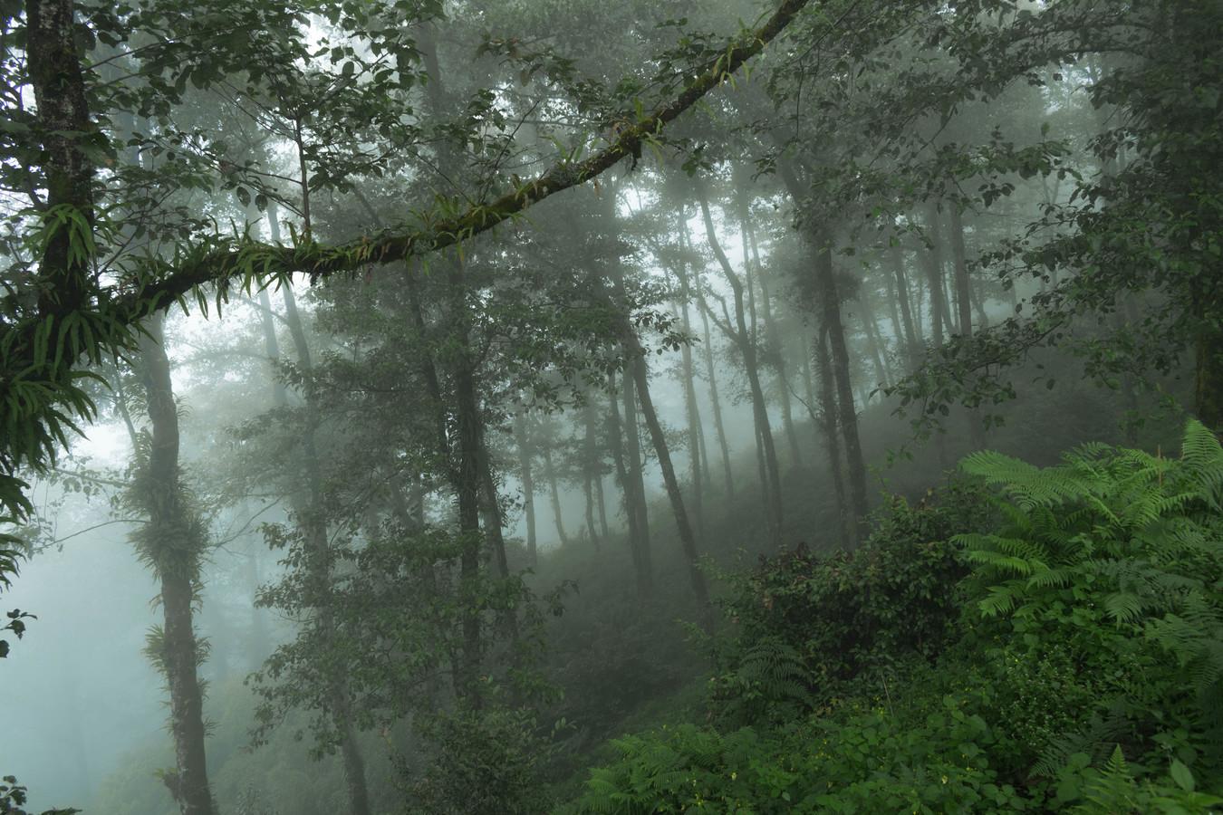 Les v oblakoch