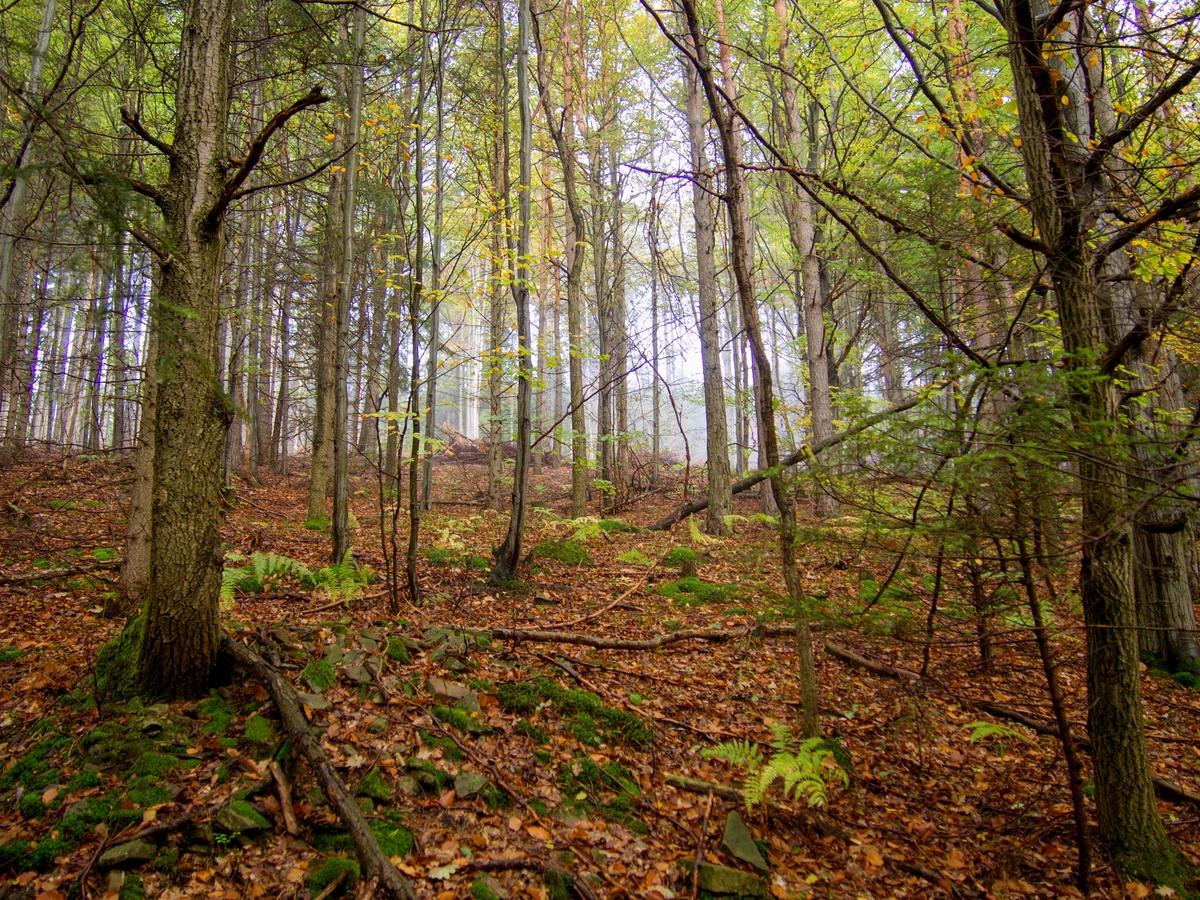 Ranní podzimní les