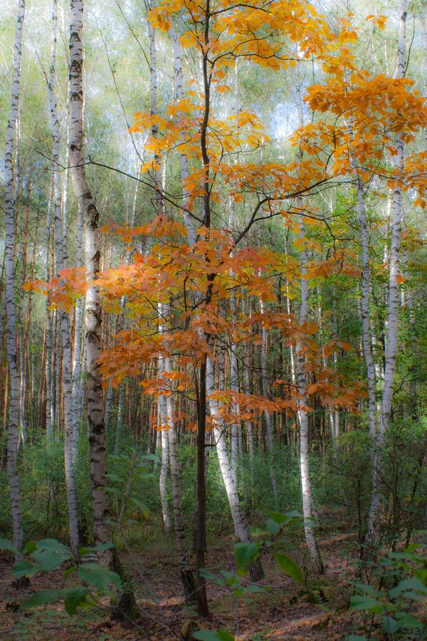 podzimní zasněnost:-)