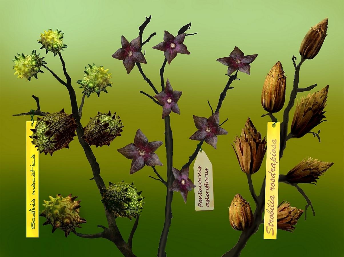 Hortus botanicus Bohniciensis