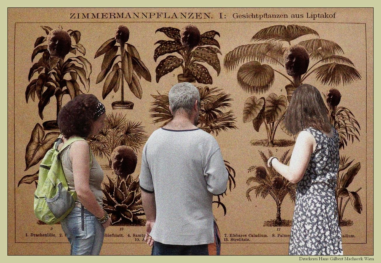 """Plakát """"Gesichtpflanzen aus Liptakof"""""""