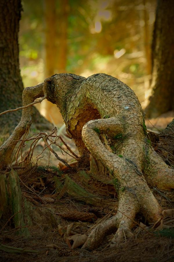 Lesní ještěr