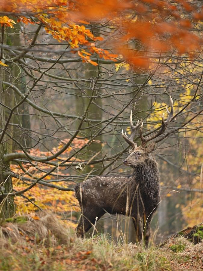 letošní podzim v přírodě (3)