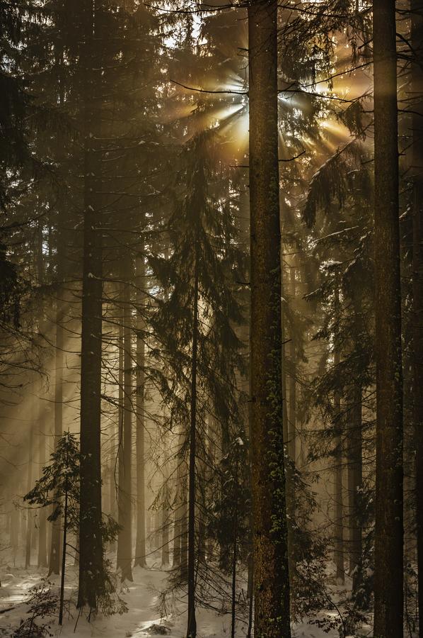 Lesní zatmění
