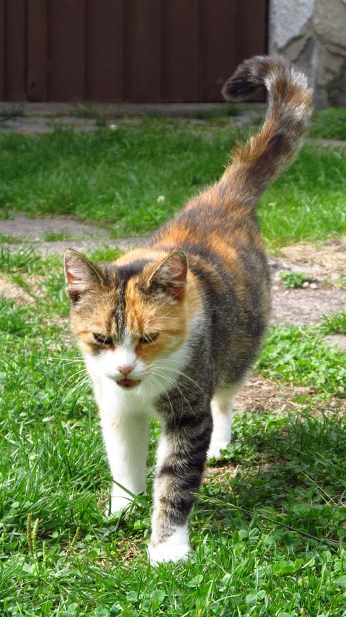 Široké kočička obrázky