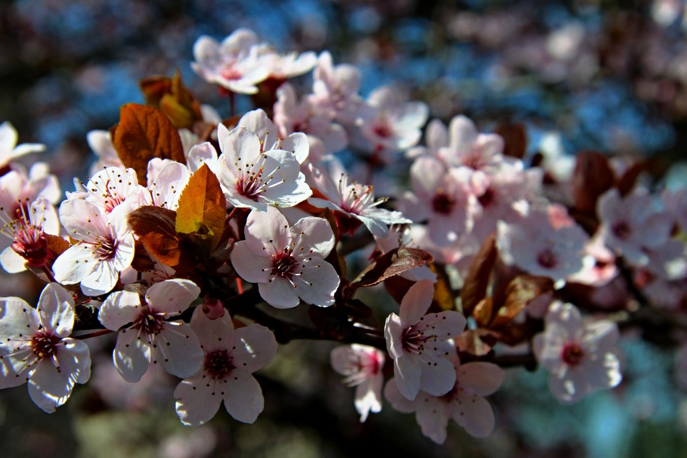 Jarní květ  III.