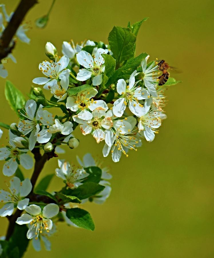 Kvetoucí Krušnohoří