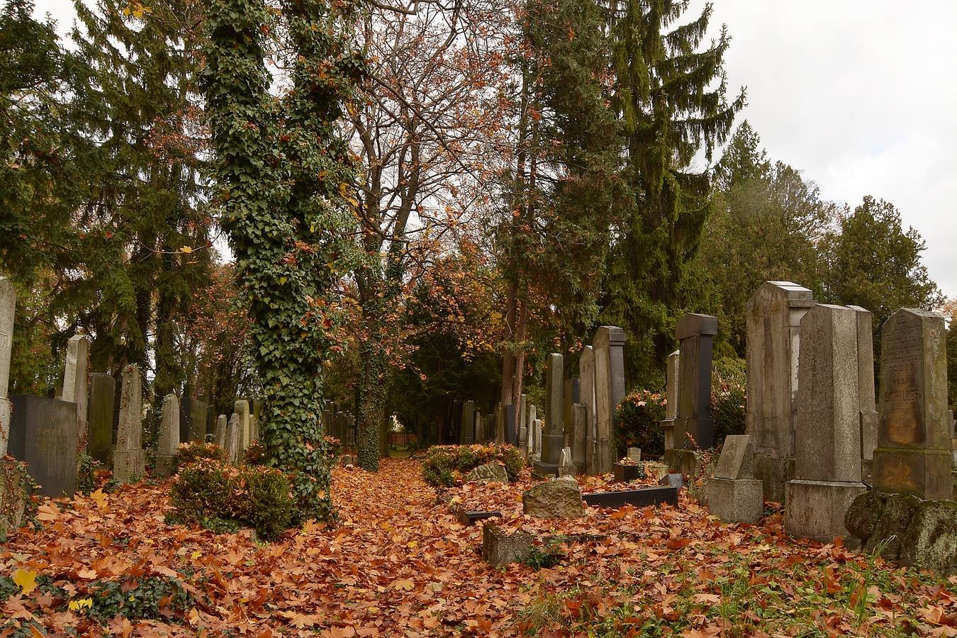 Podzim na židovkém hřbitově