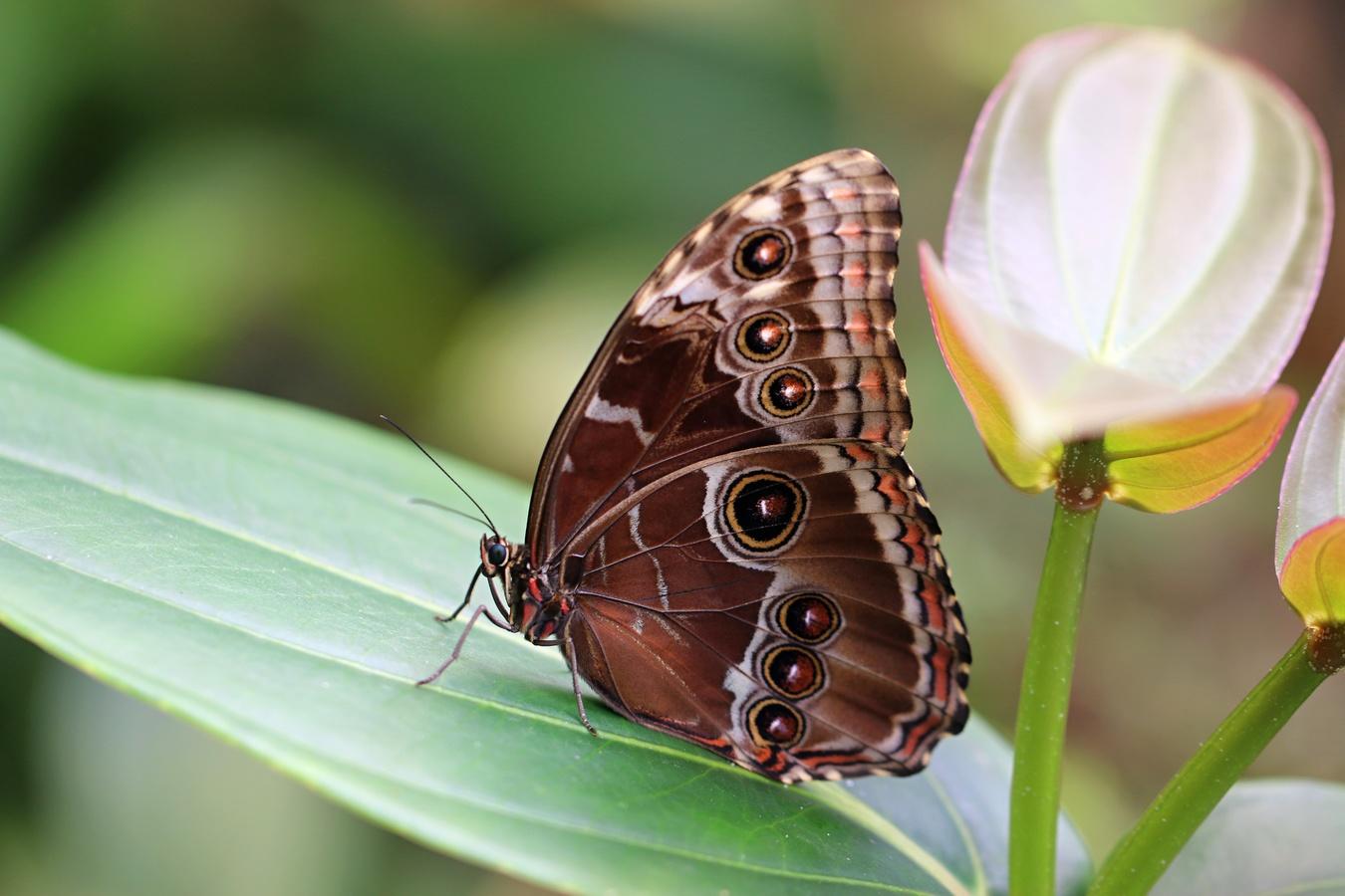 Motýlí křehkost