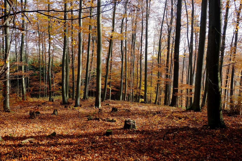 Podzimní poezie v Chřibech