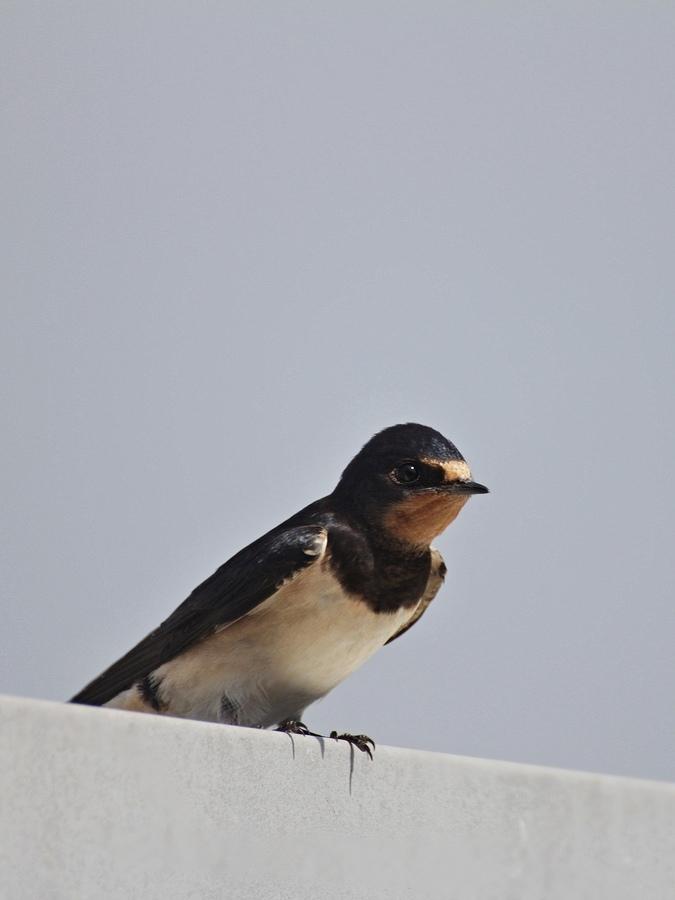 Ptáci ve městě...