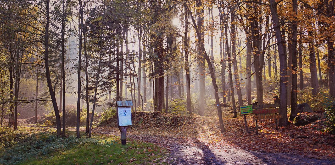 Suvenýry v lese