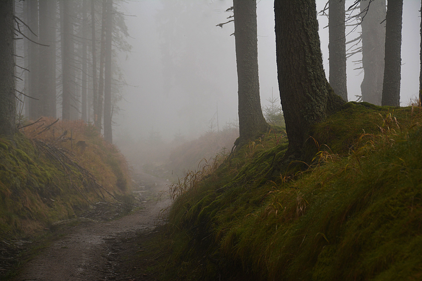 V tajuplném lese...