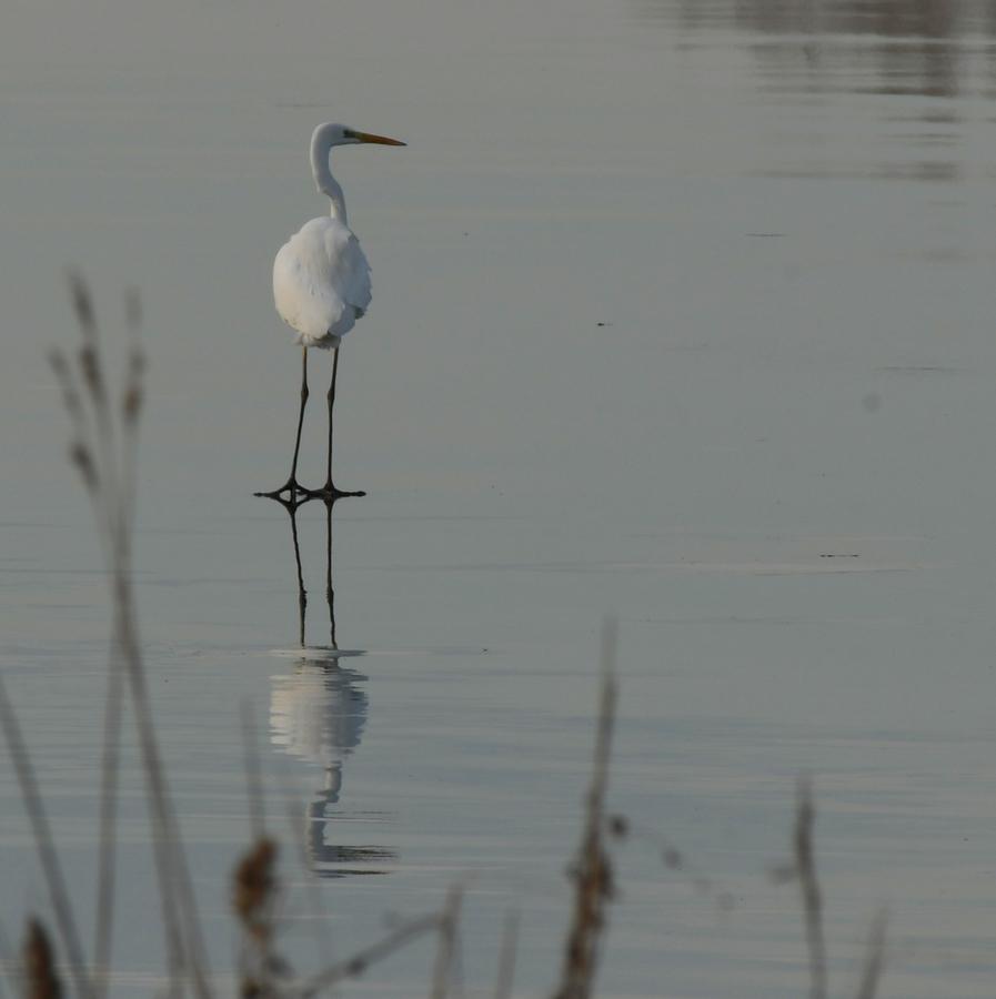 Volavka chodící po hladině vody ;-)