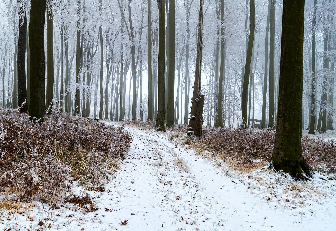 Zima - Malé Karpaty