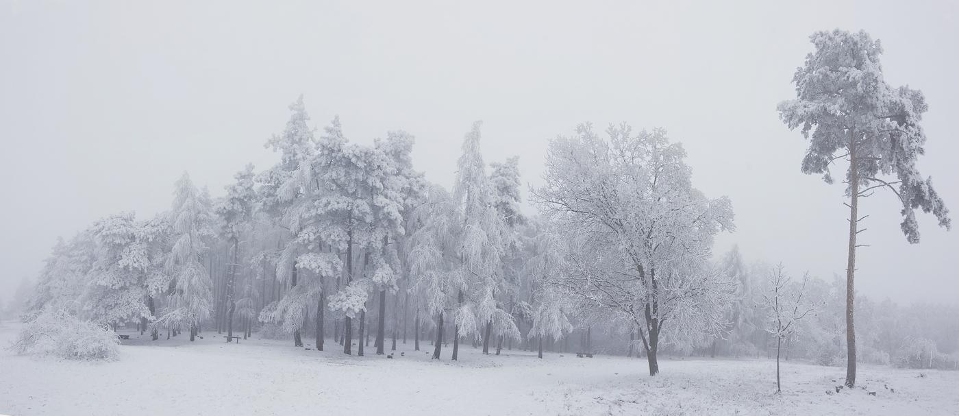 Frozen (zamrzlo)