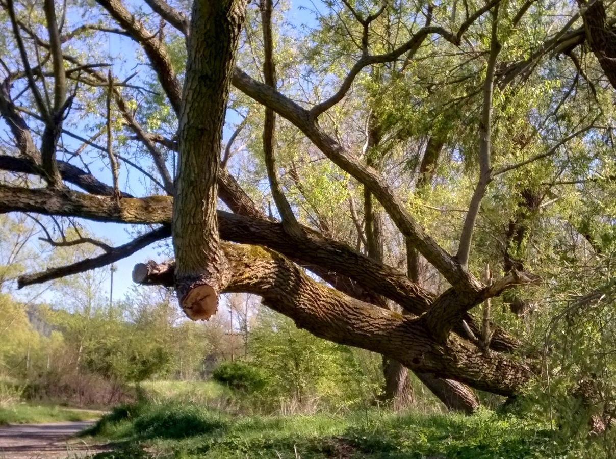 Strom nemusí být rovný
