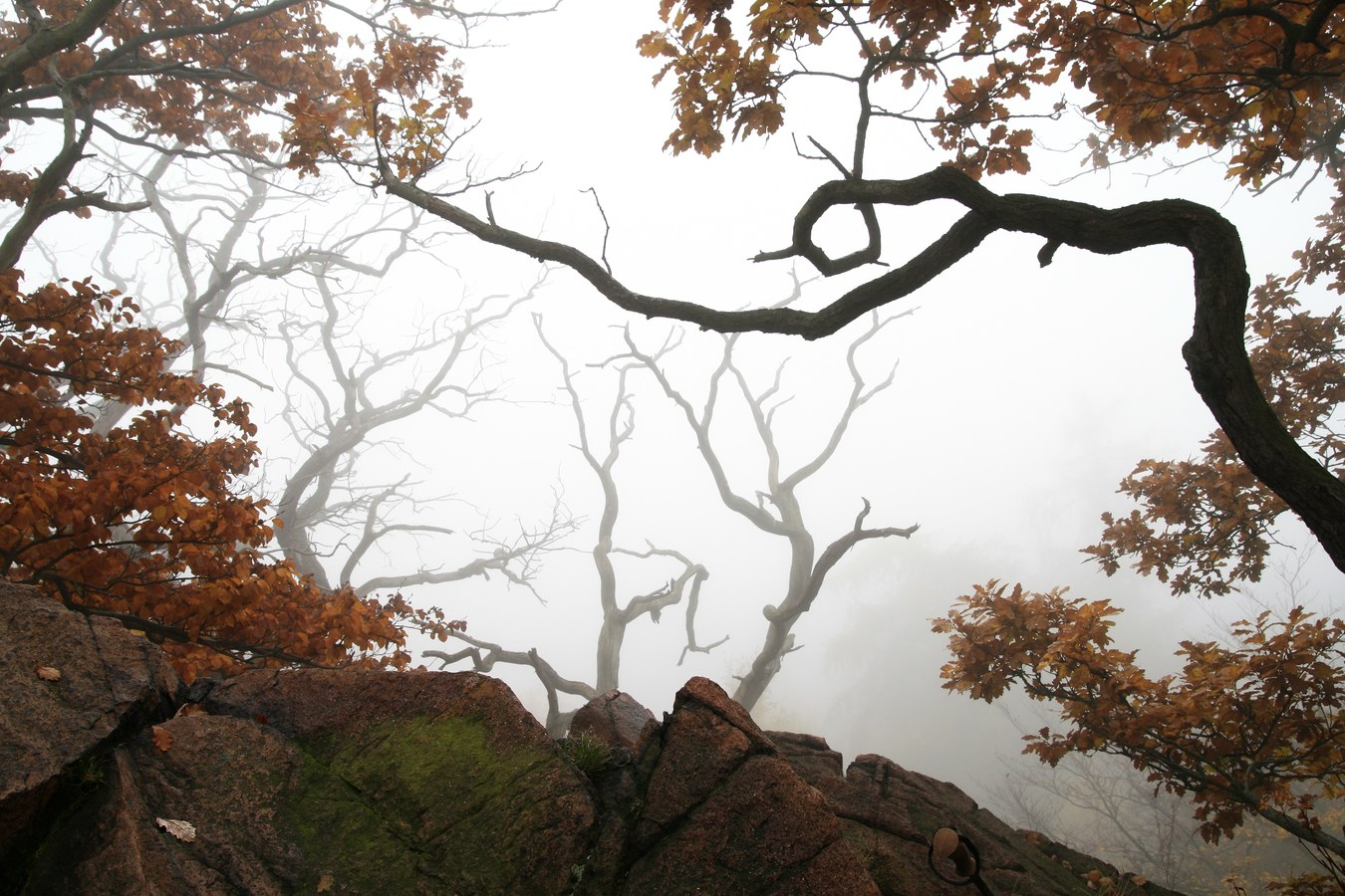 Mlha v Krušných horách