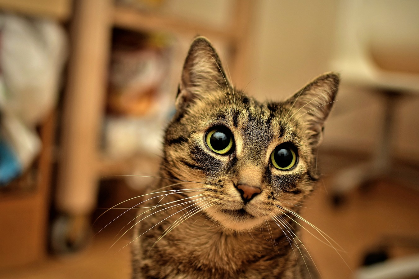 Pohled do kočičí duše
