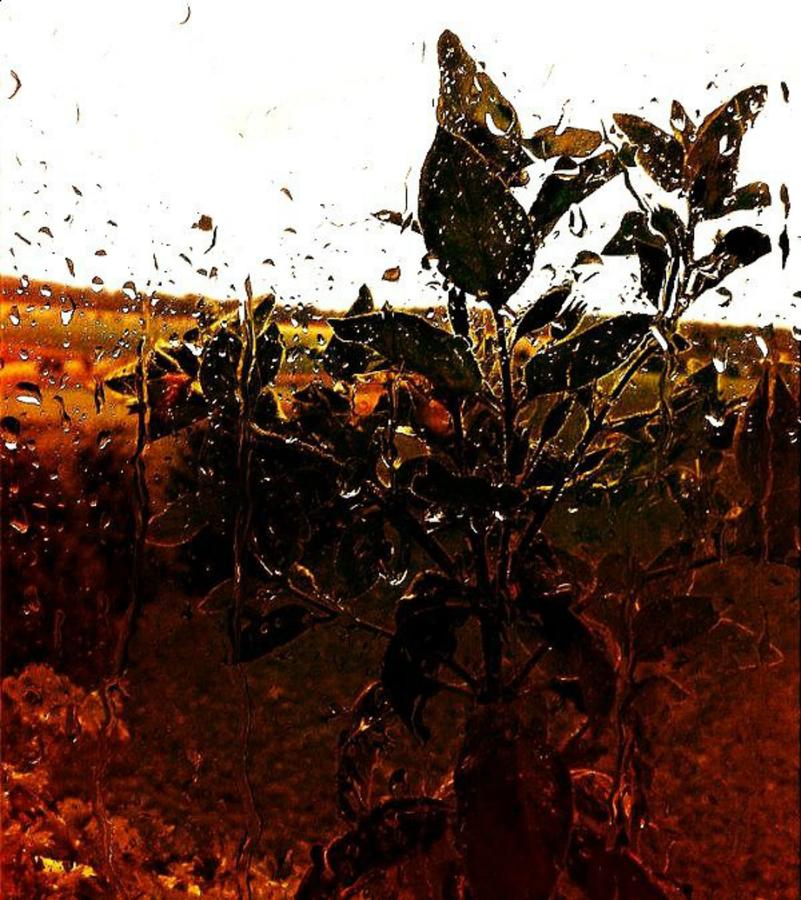 dešťové abstraktno