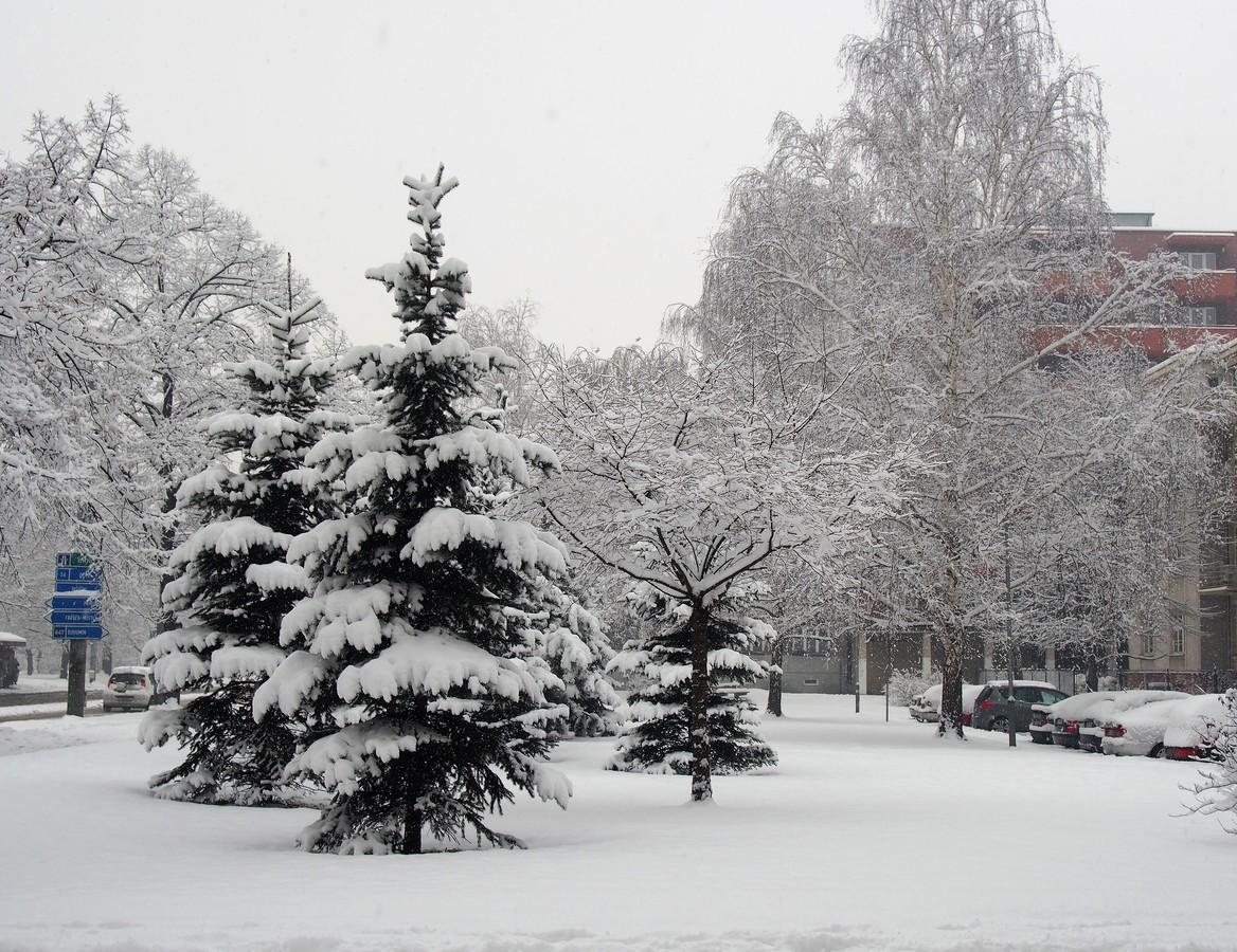 Sníh ve městě