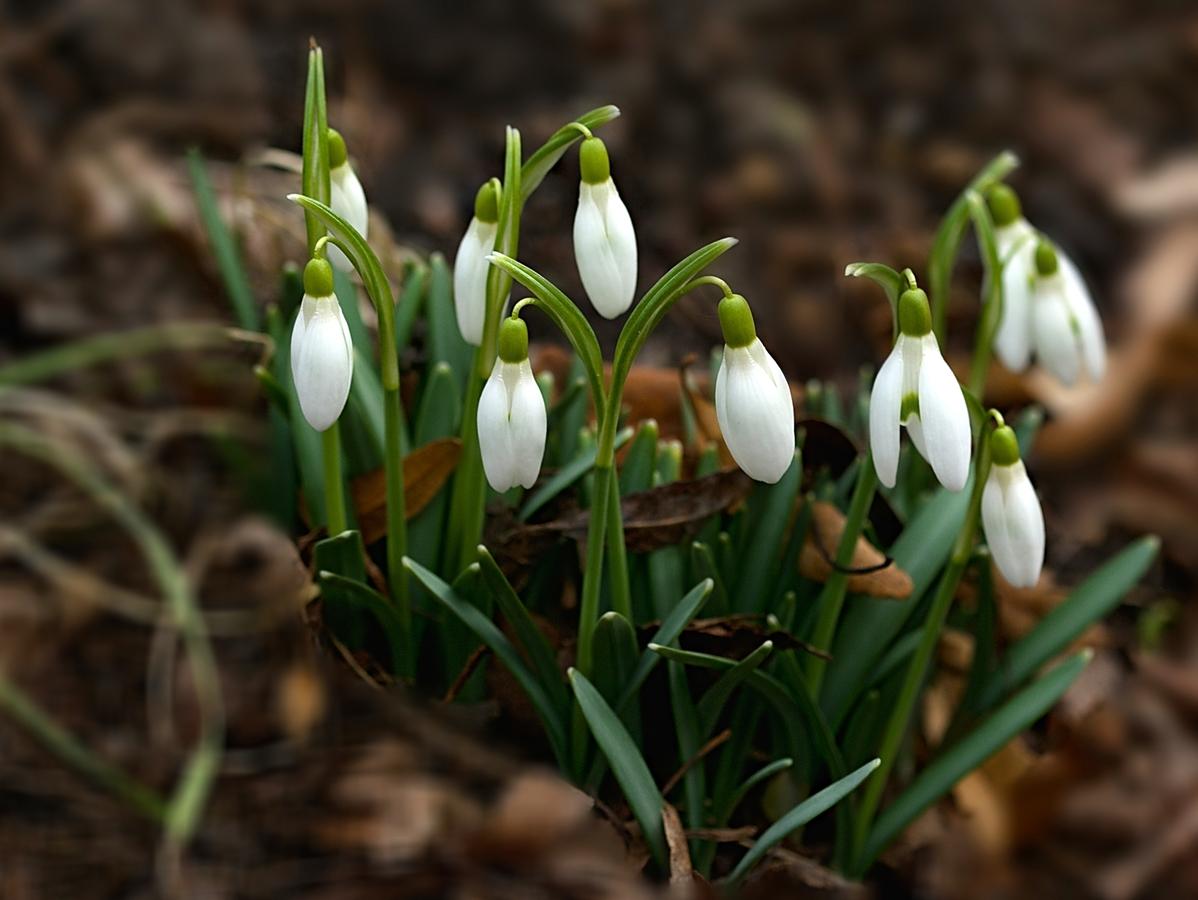 opavské jaro