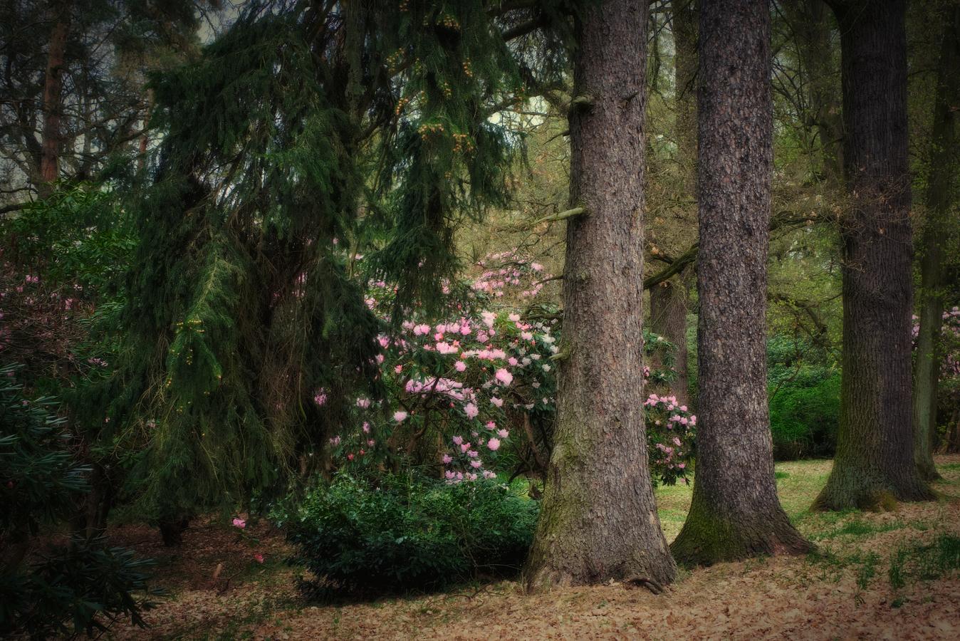 les bratří Grimmů