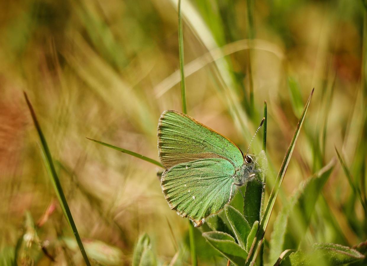 Motýlí odpočinek
