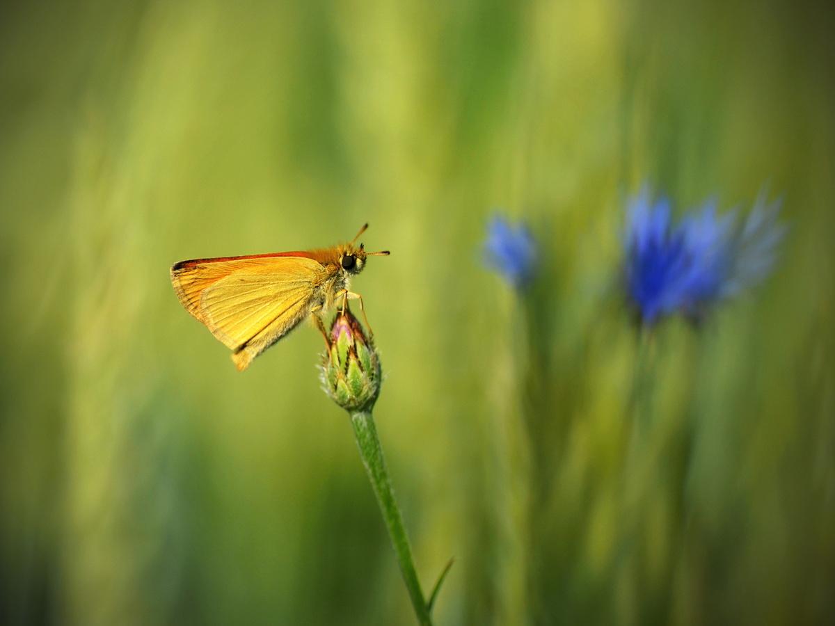 ..poslední motýl...