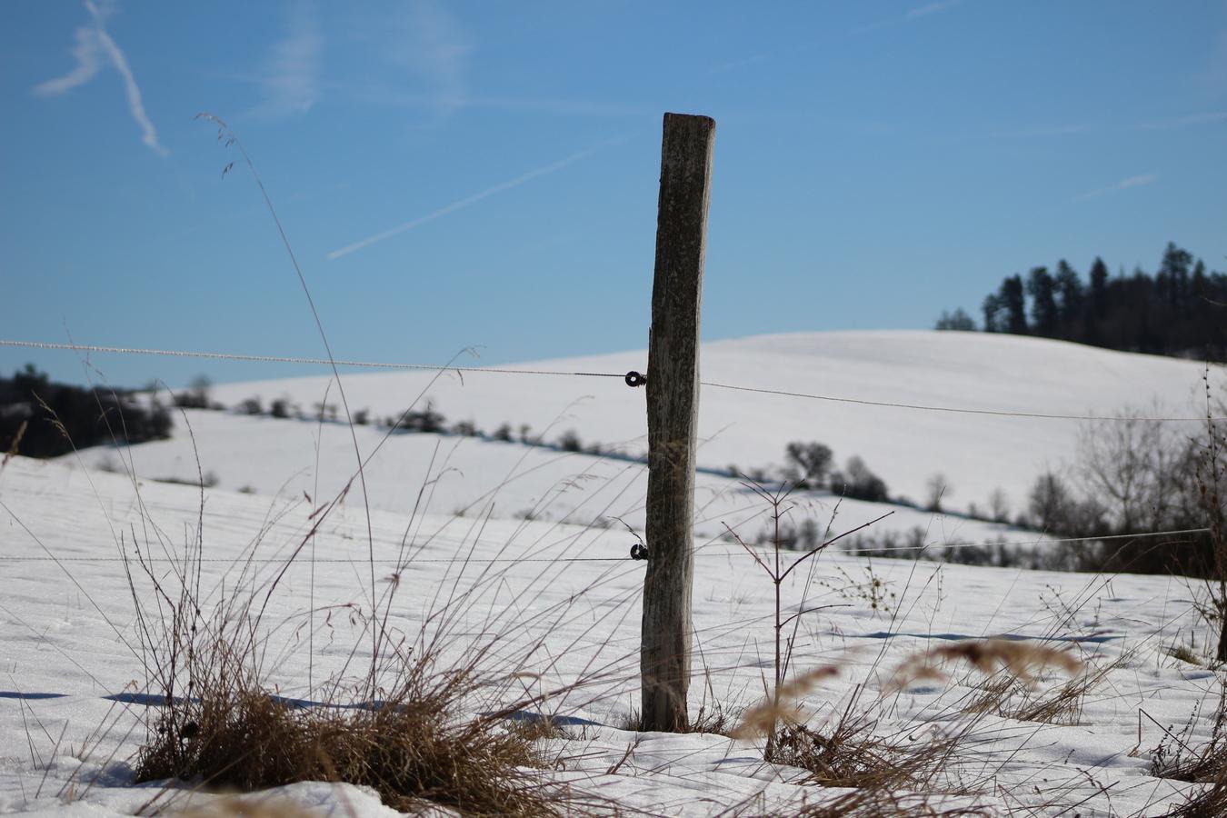 kůl v plotě