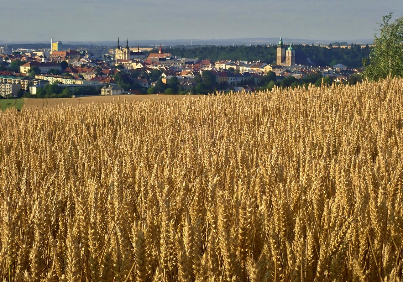 Konec řepky v Čechách